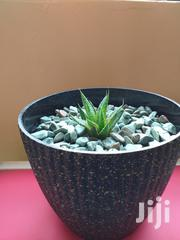 Potted Plants   Garden for sale in Machakos, Athi River