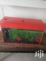 Aquariums, Accessories, Fish And Fish Food | Fish for sale in Nairobi, Kasarani