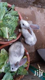 Rabbit | Livestock & Poultry for sale in Mombasa, Majengo