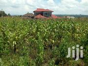 Plot For Sale In Kiamunyi Quarter Acre. | Land & Plots For Sale for sale in Nakuru, Nakuru East