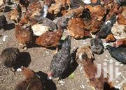 Kienyeji Chicks | Livestock & Poultry for sale in Uasin Gishu, Simat/Kapseret