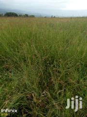 Boma Hay For Sale | Feeds, Supplements & Seeds for sale in Nakuru, Naivasha East