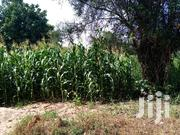 Half Acre in Kiamuringa | Land & Plots For Sale for sale in Embu, Mbeti North
