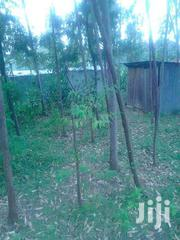 Ojolla 1 Acre With Trees | Land & Plots For Sale for sale in Kisumu, Central Kisumu