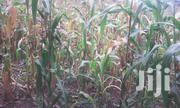 1acre for Sale at Kiamuringa B | Land & Plots For Sale for sale in Embu, Mbeti South