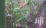 1/4 For Sale At Rwika | Land & Plots For Sale for sale in Embu, Mbeti South