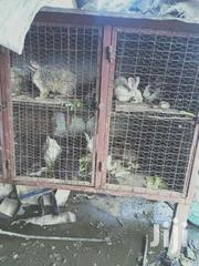 Selling Rabbit Urine, | Home Accessories for sale in Mombasa, Kipevu