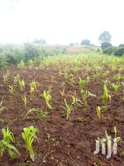 4 Acres Land Ndeiya on Tarmac Ideal for Commercial Investments | Land & Plots For Sale for sale in Kiambu, Ndeiya