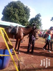 Pony For Sale | Other Animals for sale in Kiambu, Karuri