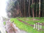 Eucalyptus Trees For Sale | Land & Plots For Sale for sale in Kisumu, South West Kisumu