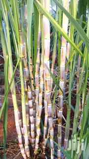 Sugarcane And More | Feeds, Supplements & Seeds for sale in Machakos, Kithimani