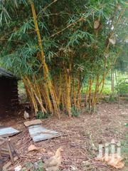Bamboo For Sale | Garden for sale in Homa Bay, Central Kasipul