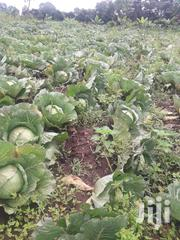 Gloria Cabbages | Meals & Drinks for sale in Bomet, Mutarakwa