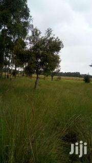 54 Acres For Sale In Kinangop Miharate 1/2 Km From Tarmac.   Land & Plots For Sale for sale in Nyandarua, Kipipiri