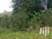 2 1/2 Acres With Coffee Plantstion | Land & Plots For Sale for sale in Nyeri, Gatitu/Muruguru