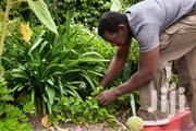 Professional Gardeners For Hire/Our Experts Will Do The Job | Other Jobs for sale in Nairobi, Kileleshwa