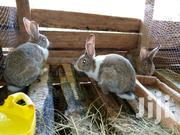 Rabbit Farming Thika | Livestock & Poultry for sale in Kiambu, Thika