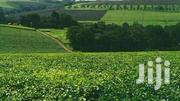 Land For Sale In Limuru With Tea Bushes | Land & Plots For Sale for sale in Nairobi, Nairobi Central