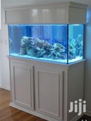 Aquariums For Home Decor | Fish for sale in Nairobi, Lavington