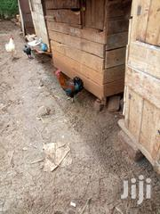 Kienyeji Chicken For Sale | Livestock & Poultry for sale in Nairobi, Kangemi
