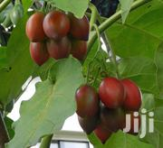 GET RICH Thru Grafted Tree Tomato (Tamarillo) Farming Seed Now-kes 999 | Feeds, Supplements & Seeds for sale in Nairobi, Nairobi Central