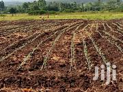 1 Acre Land For Sale | Land & Plots For Sale for sale in Nakuru, Elburgon