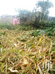 Awaiting Procession | Land & Plots For Sale for sale in Machakos, Matuu