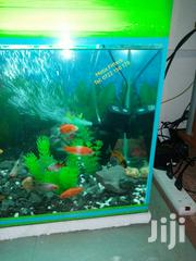 Gold Fish Aquarium | Fish for sale in Nairobi, Nairobi Central