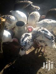 Muture Male And Female Turkey | Livestock & Poultry for sale in Nakuru, Mbaruk/Eburu