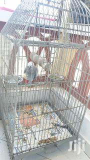Large Parrot Bird Cage | Pet's Accessories for sale in Mombasa, Mji Wa Kale/Makadara