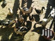 Ducks For Sale | Livestock & Poultry for sale in Nairobi, Kangemi