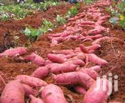 Sweet Potato Available In Sacks From TZ. We Are Located At Mothurwa. | Feeds, Supplements & Seeds for sale in Nairobi, Nairobi Central