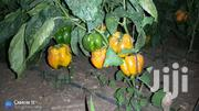 Coloured Capsicums (Yellow) | Meals & Drinks for sale in Laikipia, Tigithi