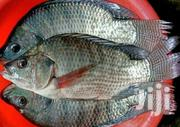 Freash Tilapia Fish. | Fish for sale in Nairobi, Kawangware