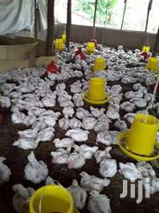 Looking For Broiler Chicken From Farmers | Livestock & Poultry for sale in Nairobi, Pangani