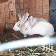 Rabbits For Sale | Livestock & Poultry for sale in Kiambu, Ruiru