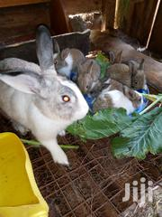 Rabbit Farming | Livestock & Poultry for sale in Kiambu, Thika