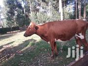 Ashyire Heifer | Livestock & Poultry for sale in Kericho, Ainamoi