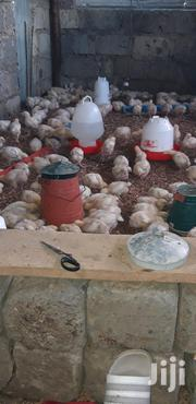 Broiler Chickens For Sale | Livestock & Poultry for sale in Nairobi, Mihango