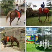 One Stop !Pony / Horse Riding Camel Ride For Hire | Party, Catering & Event Services for sale in Nairobi, Parklands/Highridge