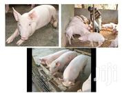 9 Medium Piglets For Sale | Other Animals for sale in Nairobi, Nairobi Central
