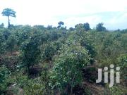 11 Acres in Embu With Muguka Plants | Land & Plots For Sale for sale in Embu, Muminji