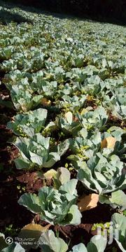 Gloria Cabbages Ready For Consumption | Meals & Drinks for sale in Bomet, Mogogosiek