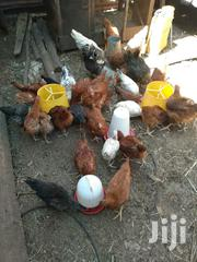 Chickens For Sale | Livestock & Poultry for sale in Kajiado, Ngong