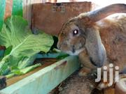 Rabbit Farming | Other Animals for sale in Kiambu, Thika