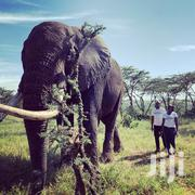 Ol Jogi Wildlife Conservancy Day Trip;March 14th,2020 | Travel Agents & Tours for sale in Nairobi, Kilimani