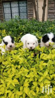 House Pets | Dogs & Puppies for sale in Kiambu, Ndenderu