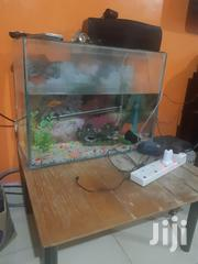 Aquarium For Sale...80ltrs | Fish for sale in Nairobi, Imara Daima