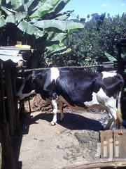 A Friesian Dairly Cow | Other Animals for sale in Nyeri, Mahiga