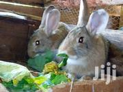 Rabbits..Carlifornia,New Zealand And Standard Chinchilla | Other Animals for sale in Kiambu, Thika